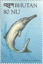 Ichthyosaurus sp.