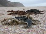 Dode zeevogels