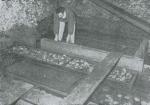 April 1949: de heer Zoete in de oesterput gelegen in de Langestraat te Oostende