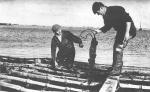 """Eind jaren 1950: Arbeiders van de kwekerij van """"Halewyck & Cie"""" in de Spuikom. Het onderschrift bij deze foto luidde: """"Aan een vlechtwerk van planten en takken hangen de met oesters beplante stokken in het zeewater van de Spuikom, zodat ze niet met de grond en het slijk in aanraking komen."""""""