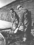 """Eind jaren 1950: Arbeiders van de kwekerij van """"Halewyck & Cie"""" in de Spuikom. Het onderschrift bij deze foto luidde: """"Met behulp van een krachtige waterstraal worden de oesters schoongemaakt, om vervolgens geëxporteerd te worden. Ook hier speelt het handwerk een grote rol."""""""