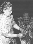"""Eind jaren 1950: Een arbeidster van de kwekerij van """"Halewyck & Cie"""" in de Spuikom. Het onderschrift bij deze foto luidde: """"Vooraleer in de handel gebracht te worden, moeten de oesters nog eens extra met een harde borstel geschrobd worden. Men wil immers een goed verzorgd product op de markt brengen."""""""