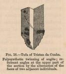 Renard (1888, fig. 16)