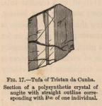 Renard (1888, fig. 17)