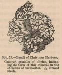 Renard (1888, fig. 19)
