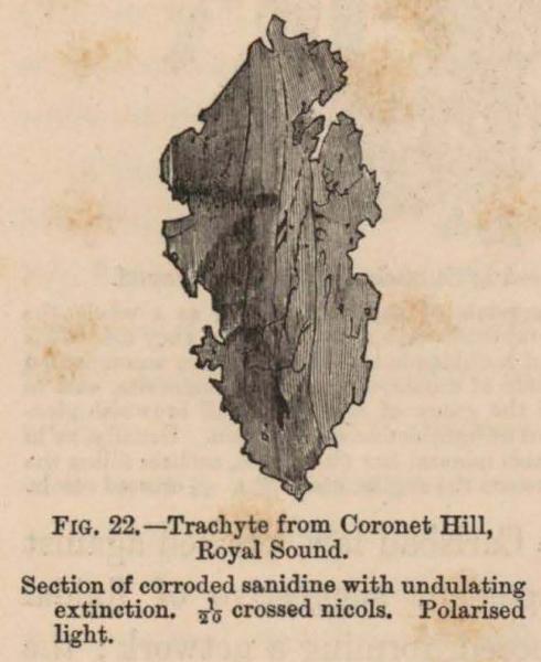 Renard (1888, fig. 22)