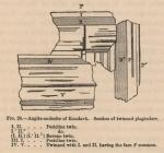 Renard (1888, fig. 26)