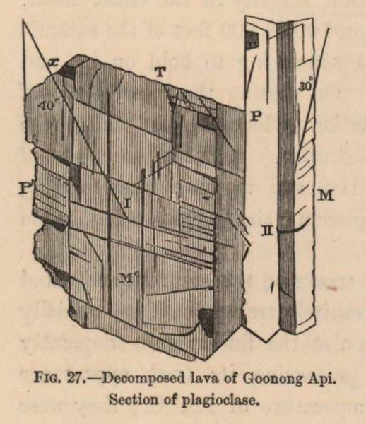 Renard (1888, fig. 27)