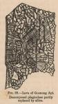 Renard (1888, fig. 28)