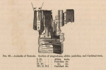 Renard (1888, fig. 29)