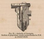 Renard (1888, fig. 31)