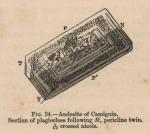 Renard (1888, fig. 34)