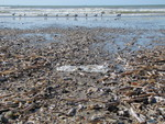 The age of plastic and invasion