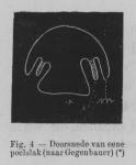 Eben (1884, figuur 4)