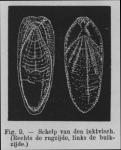 &lt;B&gt;Eben, W.&lt;/B&gt; (1884). De weekdieren van België. <i>Uitgave van het Natuurwetenschappelijk Genootschap van Gent</i>, 4. J. Vuylsteke (Boekhandel W. Rogghé): Gent. 116, 7 pl. pp.