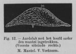 Eben (1884, figuur 12)