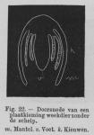 Eben (1884, figuur 22)