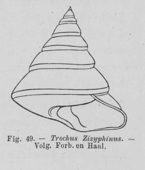 Eben (1884, figuur 49)