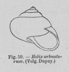 Eben (1884, figuur 59)