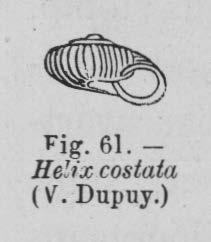 Eben (1884, figuur 61)