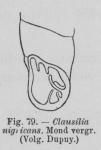 Eben, W. (1884). De weekdieren van België. Uitgave van het Natuurwetenschappelijk Genootschap van Gent, 4. J. Vuylsteke (Boekhandel W. Rogghé): Gent. 116, 7 pl. pp.