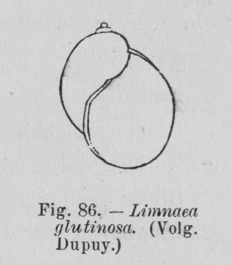 Eben (1884, figuur 86)
