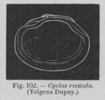 Eben (1884, figuur 102)
