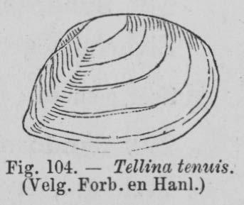 Eben (1884, figuur 104)