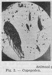 Gilis, C. (1942). Vulgarisatie van de wetenschap in verband met de zeevisscherij: korte inhoud van de causeries gehouden in 1941-1942 door Ch. Gilis, technicus bij den Staatszeevisscherijdienst, in verschillende centra der kust. Beheer van het Zeew