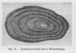 Gadiformes