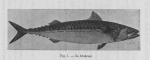 Gilis (1939, figuur 1)