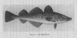 <B>Gilis, Ch.</B> (1939). Korte inhoud van de wetenschappelijke voordrachten gegeven door den heer Charles Gilis, Laboratoriumleider van het Zeewetenschappelijk Instituut te Oostende aan de visschers en de leerlingen van de visschersscholen van Blankenber