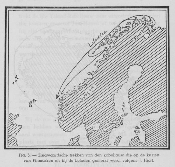 Gilis (1939, figuur 5)