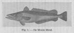 <B>Gilis, Ch.</B> (1940). Korte inhoud van de wetenschappelijke voordrachten gegeven door den heer Charles Gilis, Laboratoriumleider van het Zeewetenschappelijk Instituut te Oostende aan de visschers en de leerlingen van de visschersscholen van Blankenber