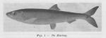 <B>Gilis, Ch.</B> (1957). Voordrachten in verband met de zeevisserij gehouden door Ch. Gilis, technisch adjunct aan het Zeewetenschappelijk Instituut, aan de leerlingen van de visserijscholen in 1957. Zeewetenschappelijk Instituut: Oostende. 50 pp.