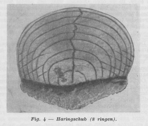Gilis (1957, figuur 1.4)