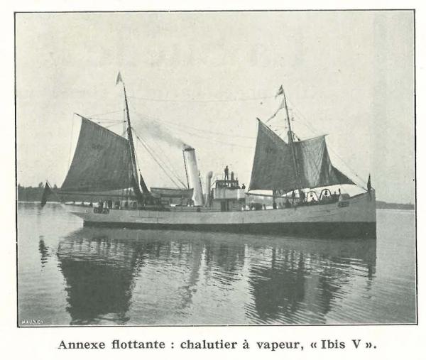 Vandeput (1932, pl. 111)
