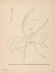 Denucé & Gernez (1936, Pl. 04.3)