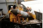 Behandeling van bom aan boord