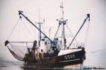 O.599 Zeevogel (bouwjaar 1964)