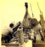 Type visserij