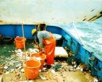 Vis sorteren op het achterdek