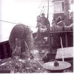 Uitsorteren vangst op garnaalvisser