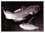 Gemerkte vis