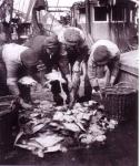 Vis sorteren op de H.60 Santa Maria (Bouwjaar 1931)