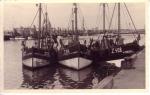 Garnaalvissers aan steiger van oude vissershaven Zeebrugge