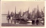 Garnaalvissers in haven Breskens