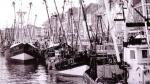 Garnaalvissers in Montgomerydok Oostende, author: Onbekend
