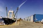 Z.186 Shannon (Bouwjaar 1975) aan nieuwe vismijn Zeebrugge