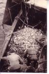 Vangst uitlezen aan dek